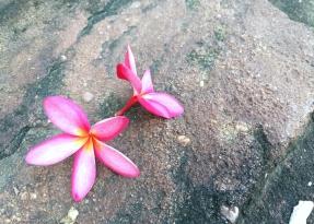 sophrologie fleur